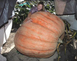 Huge_pumpkin