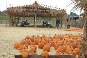 Pumpkin_patch1_2