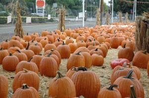 Pumpkin_patch3